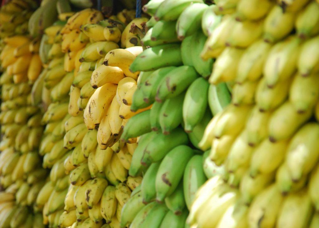 Mogna och omogna bananer